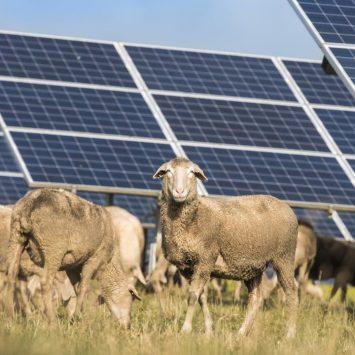 Ferme panneau solaire