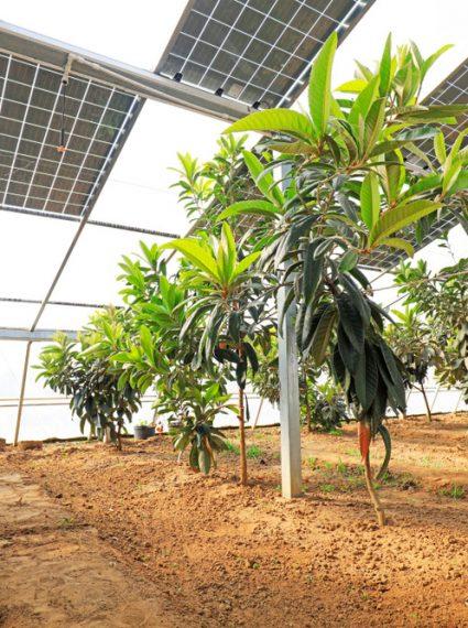 Installation de serres photovoltaïques pour les agriculteurs