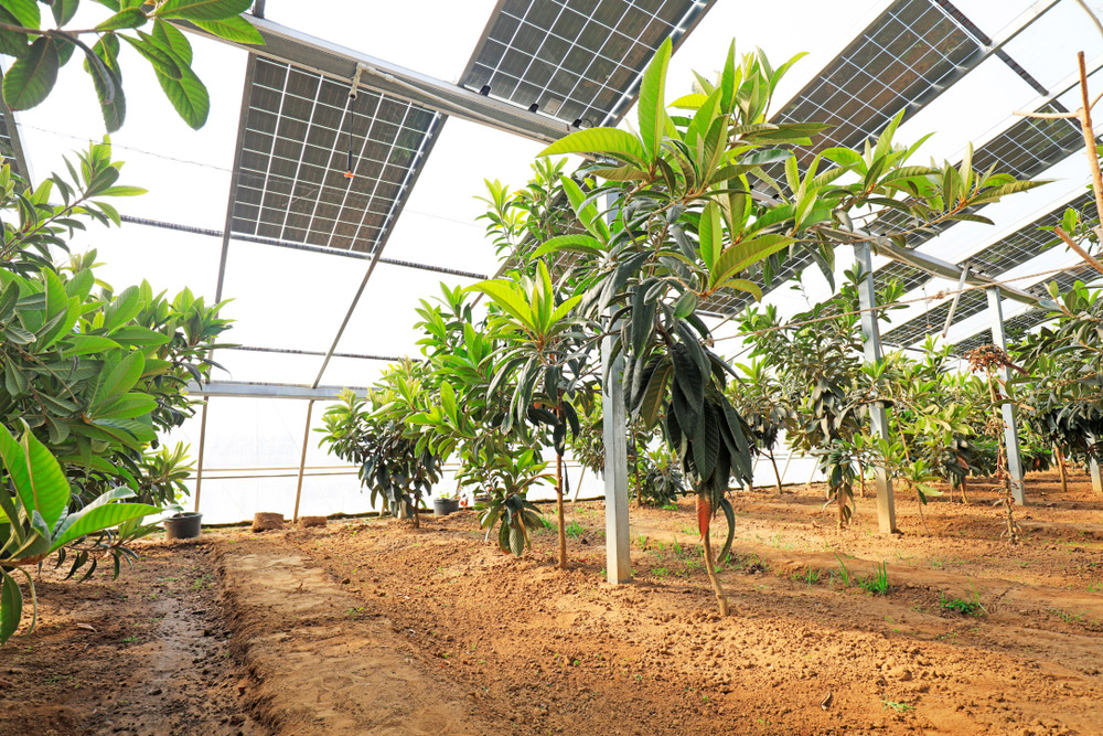 Installation-serres-photovoltaïques
