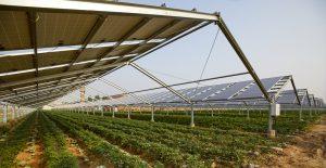L'agrivoltaïque définition et fonctionnements