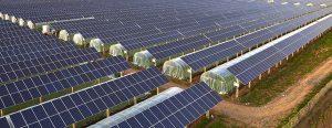 Panneaux solaires sur hangar agricole