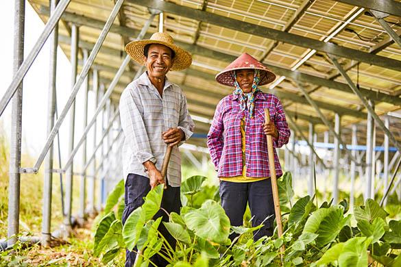 Quels sont les avantages de l'agrivoltaïque ?