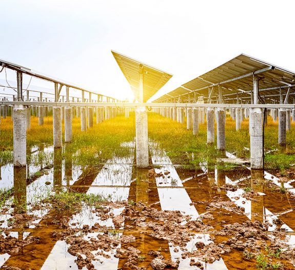 agrivoltaisme-panneau-solaire-culture-agricole