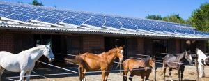 Manège équestre photovoltaïque