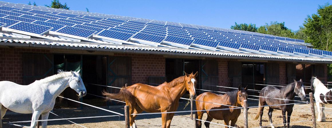 Manège-equestre-photovoltaïque