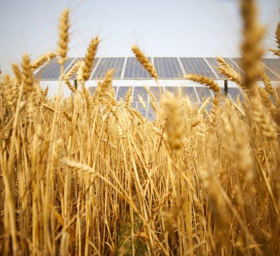partenaire de confiance pour les projets d'agrivoltaïsme