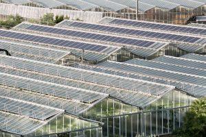 realisation-serre-photovoltaique-1