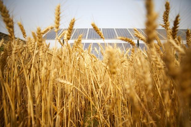 placement d'un photovoltaïque agricole